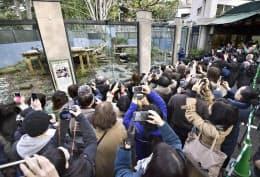 上野動物園で公開されているジャイアントパンダのシャンシャンとシンシンを見る人たち(2月、東京都台東区)=共同