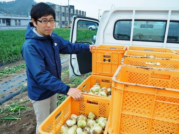 収穫したタマネギをトラックに積み込む春一番の吉満社長。前職は銀行の支店長だった(鹿児島県日置市)