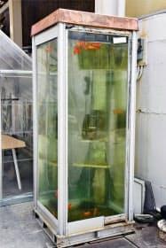 奈良県大和郡山市の柳町商店街に設置されている、電話ボックスの内部に水が満たされ金魚が泳ぐオブジェ(4日午前)=共同