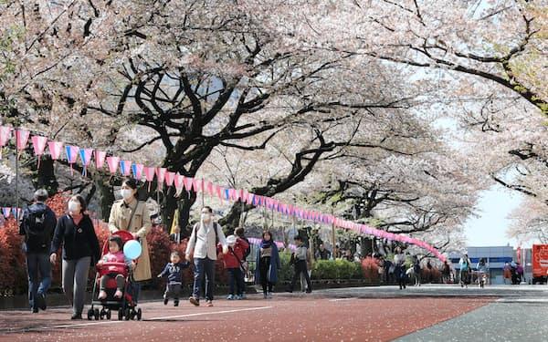 家族連れでにぎわう播磨坂の桜並木(東京都文京区)
