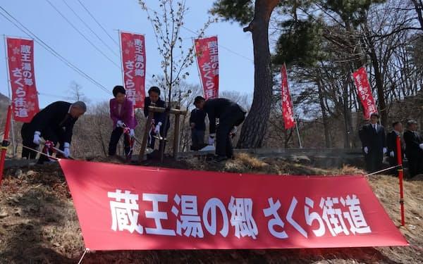 桜を植樹する山形県の吉村知事(左から2人目)ら関係者(19日、山形市の蔵王温泉)