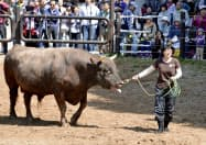 牛の角突きの取組後に「小豆丸」を引き回すオーナーの森山明子さん(5日午後、新潟県長岡市)=共同