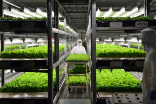 レタスを育てる植物工場(京都府亀岡市)