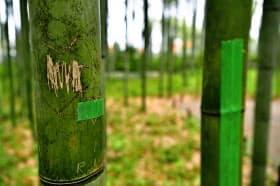 落書きされた竹(17日午後、京都・嵐山)=共同