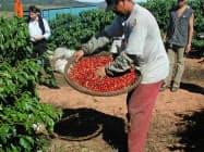 レアル安でブラジルの輸出が増えるとの観測が根強い