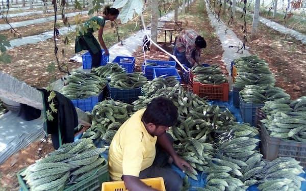 ニンジャカートは約4000の農家から農作物を仕入れている(南部カルナタカ州)