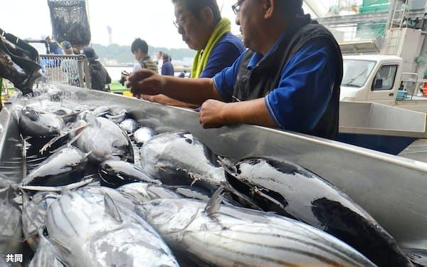 福島県いわき市の小名浜港に今シーズン初めて水揚げされたカツオなど(30日午前)=共同