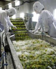 白鶴酒造の醸造所で行われる梅の実の洗浄作業(5日、神戸市)=共同