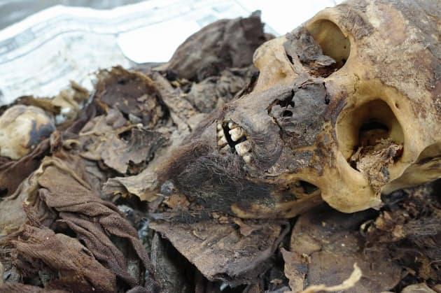 約3千年前のひげのあるミイラ(アコリス調査団提供)=共同