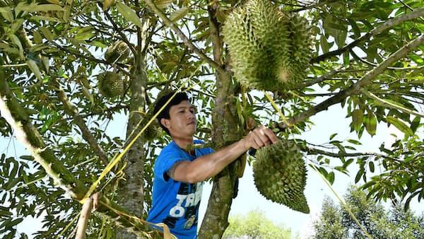 「果物の王様」アジア経済の変化映す
