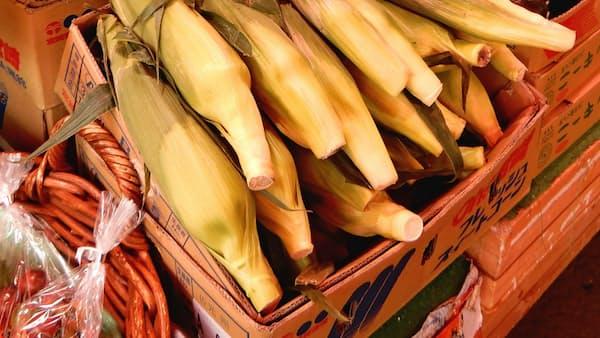 トウモロコシ卸値4割安 好天で生育順調