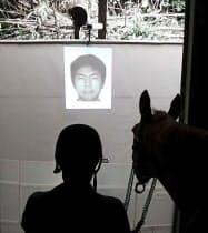 プロジェクターで投影した人の顔を馬に見せ、反応を調べる実験(2016年9月、東京都三鷹市)=中村航介さん提供・共同