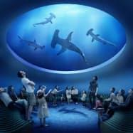 四国水族館のサメを下から見上げる展示のイメージ
