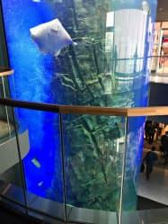 館内の吹き抜け部分にある高さ8メートルの大水槽には南の海の魚が泳ぐ