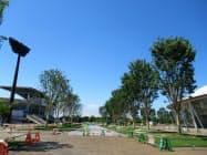 熊谷ラグビー場への通り道で暑さ対策を進める(熊谷スポーツ文化公園)