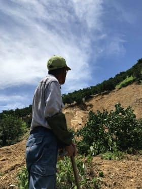「こんなに深くえぐられたのは初めて」と崩落した斜面を見上げる農家の豊島一志さん(11日、愛媛県宇和島市)