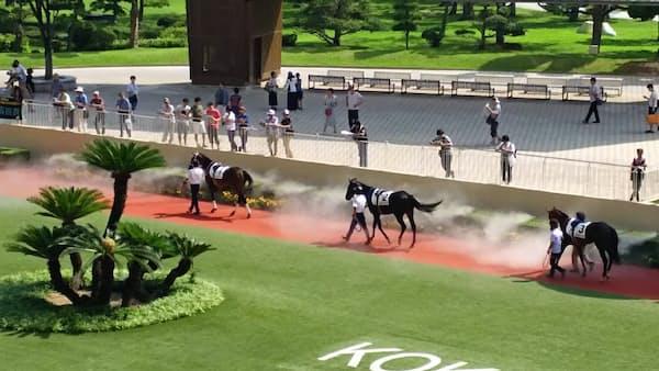 酷暑対策やムチ規制 「馬の福祉」に配慮一段と