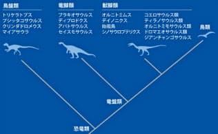 恐竜は共通祖先からまず「鳥盤類」が分かれ、残りが植物食の大型恐竜「竜脚類」と、肉食が基本の「獣脚類」に分かれた。今の鳥類は獣脚類から進化した