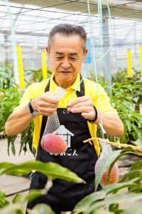 栽培が難しい果実でもAIの活用で作業を軽減できる