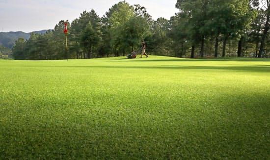 プレーが始まる前の早朝、毎日グリーンの芝を刈る