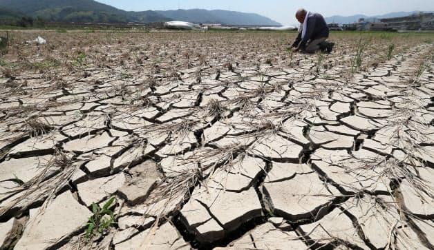 流れ込んだ土砂が乾いて、ひび割れた田んぼ。父から受け継いだ農地を守ってきた守屋杢男さん(81)は「早く再開したいが、いつになるか分からん。今できることをやるしかねえ」と話した(2日、岡山県倉敷市真備町地区)