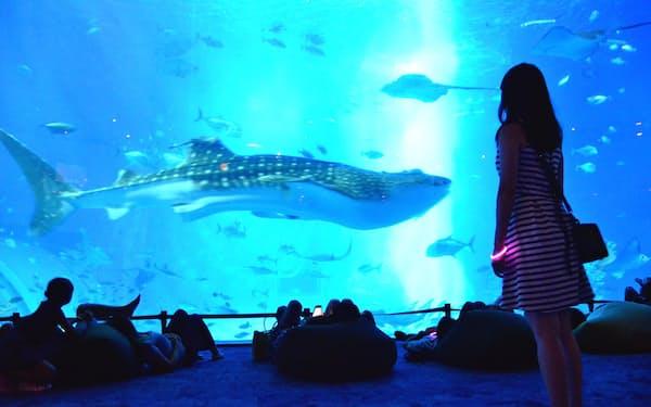 クッションに寝そべってジンベイザメやマンタなどを鑑賞できる