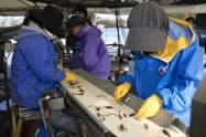 現在は稚魚を手作業で選別しているため、作業員の負担が重い