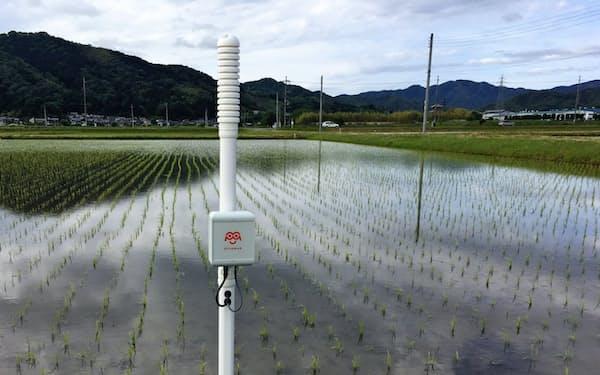 水位センサーを使いコウノトリ育むお米の栽培を省力化する(兵庫県豊岡市)