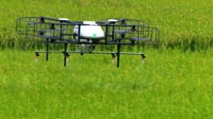稲穂の上30センチメートルを飛行するナイルワークスのドローン