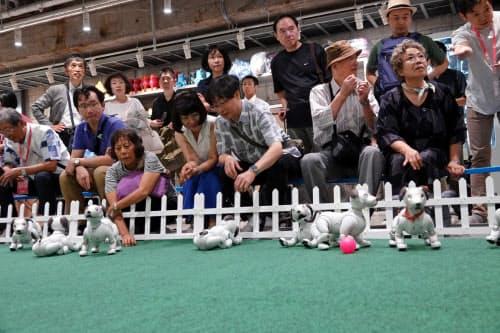 アイボが自由に歩き回る「ドッグラン」も用意したソニーのイベント(26日、東京・中央)