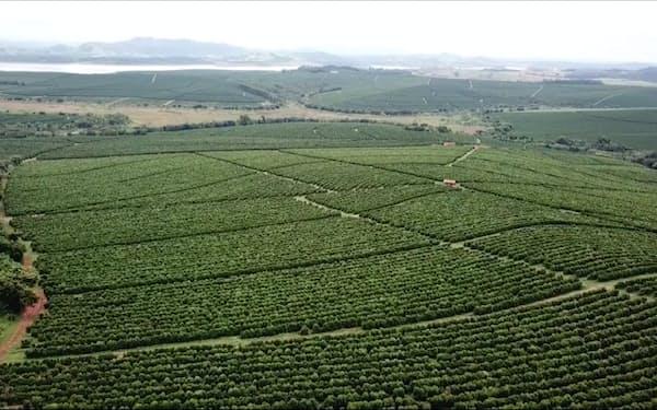 ブラジルの豊作がコーヒー相場下落につながった(ミナスジェライス州のコーヒー農園)