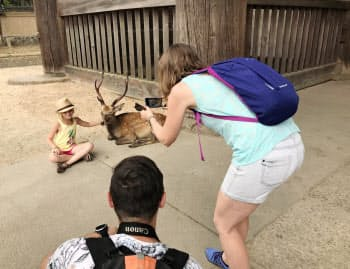 東大寺周辺は野生のシカと触れ合えるスポットとしても人気