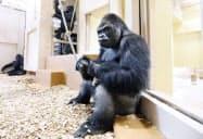 新施設に移った「シャバーニ」(5日、名古屋市千種区の東山動植物園)