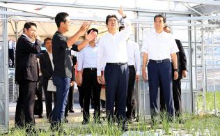 ニラ農家を視察する安倍首相=26日午前、宮崎県西都市(代表撮影)