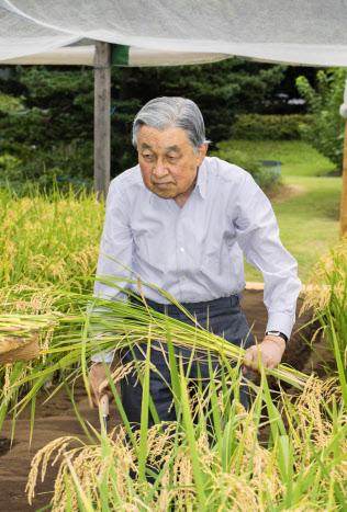 皇居内の田んぼで稲刈りをする天皇陛下(12日午後、宮内庁提供)=共同