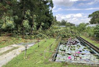 台風21号の影響で被災した大阪市立大理学部付属植物園(大阪府交野市、大阪市立大提供)=共同