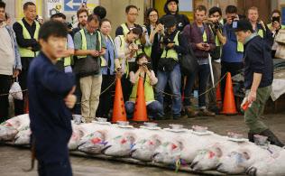 冷凍マグロの競り場を見学する外国人観光客ら(14日午前、東京都中央区の築地市場)=三村幸作撮影