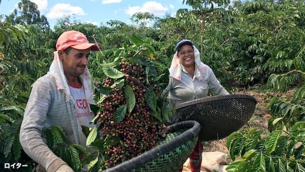 コーヒー豆、ブラジル政情不安で12年ぶり安値