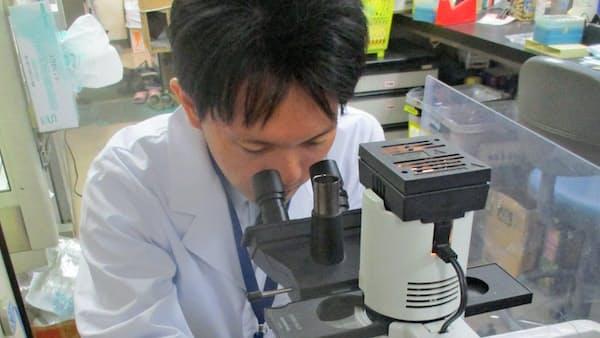 がん免疫を再活性化、CAR-T療法の効果アップへ