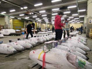 クロマグロと同様、メバチマグロも資源減少が懸念されている(東京・築地市場)