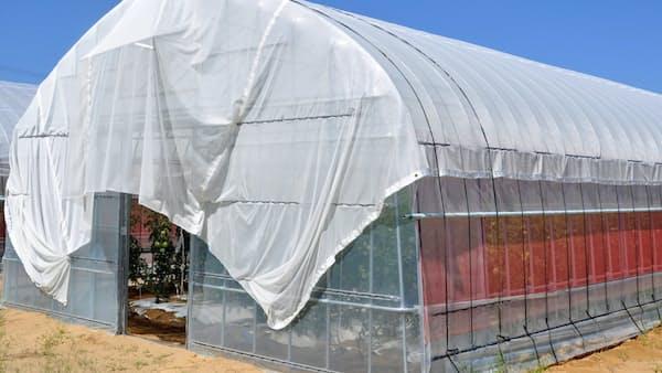 農業ハウス用遮熱材 石川県が東レと共同開発着手