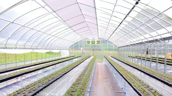 精密鋳造部品のキャステム、農業参入 トマトやイチゴ