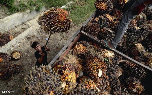 東南アジアのパーム油産地では熱帯雨林破壊や労働環境が問題視されている(インドネシアの農園)=ロイター