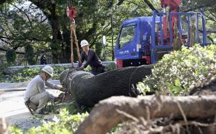 台風24号では倒木や停電が発生した(1日、東京都港区)=共同