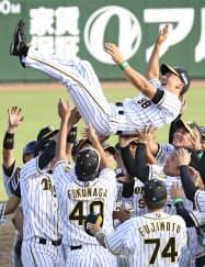12年ぶり5度目の優勝を果たし、胴上げされる阪神・矢野監督(6日、サンマリン宮崎)=共同