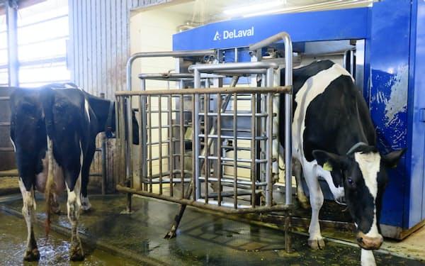 餌を求めて区画に入った牛の乳を自動で搾る搾乳ロボット。北海道では酪農の機械化が進む(江別市のカーム角山)