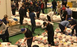 開場した豊洲市場では早速、マグロなどのセリが実施された(11日、東京都江東区)