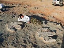 モンゴルのゴビ砂漠で発見された、大型鳥脚類恐竜のものとみられる幅約85センチの足跡化石=岡山理科大―モンゴル共同調査隊提供・共同