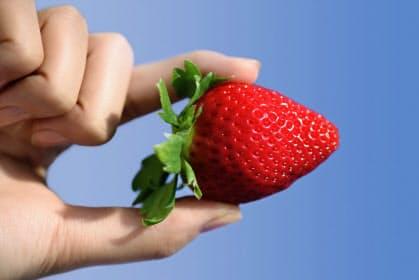 佐賀県が7年かけて開発したイチゴの新品種「いちごさん」=佐賀県提供