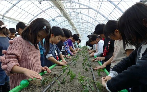 17日の定植式では地元の小学生が苗を植えた